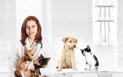 HUTECH tuyển sinh ngành thú y trình độ đại học